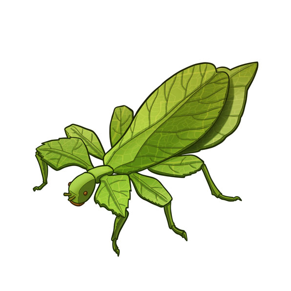 bug leaf
