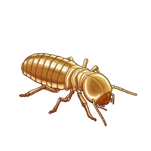 térmite