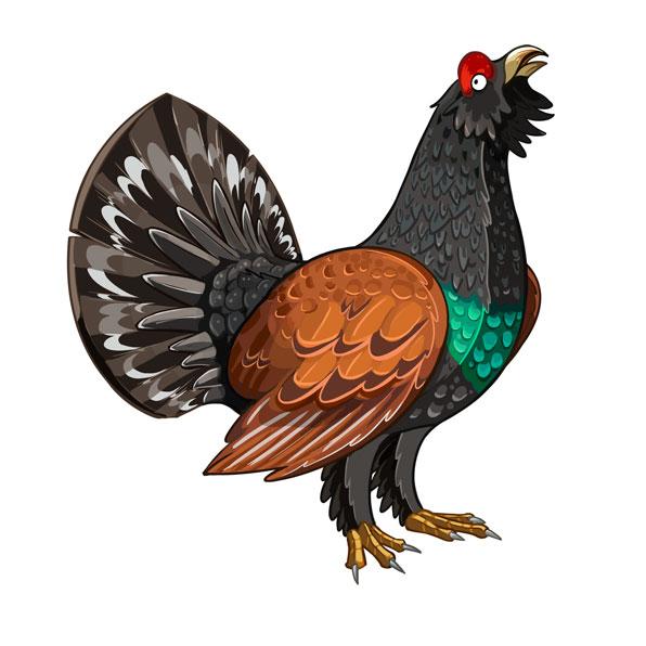 heather cock