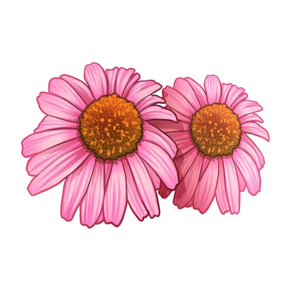 flor cónica de la pradera