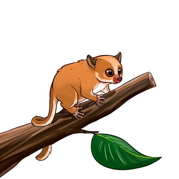 lémur ratón