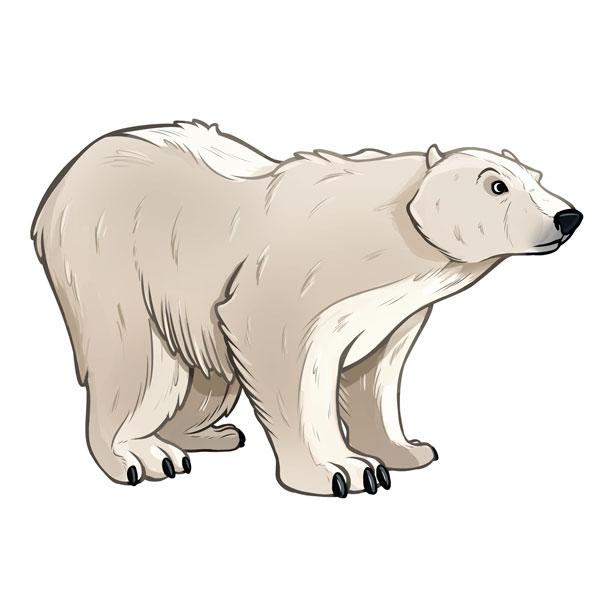 Animales de las zonas polares