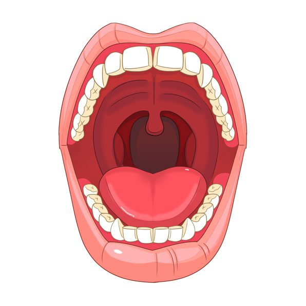 (N) Parts of the Mouth and Nose