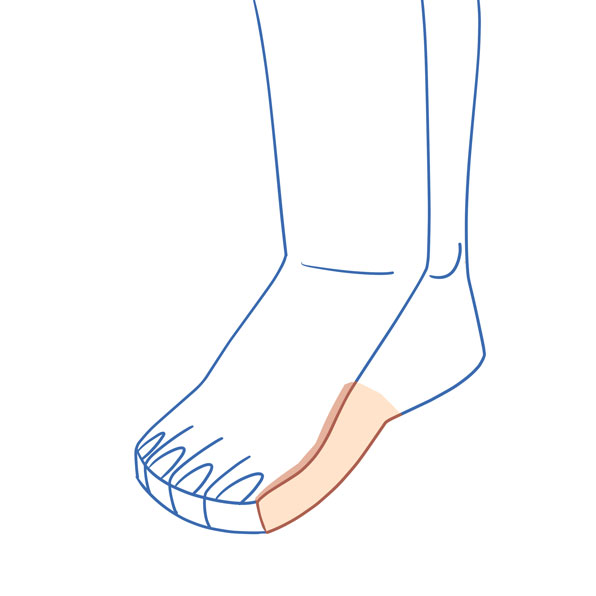 interior del pie