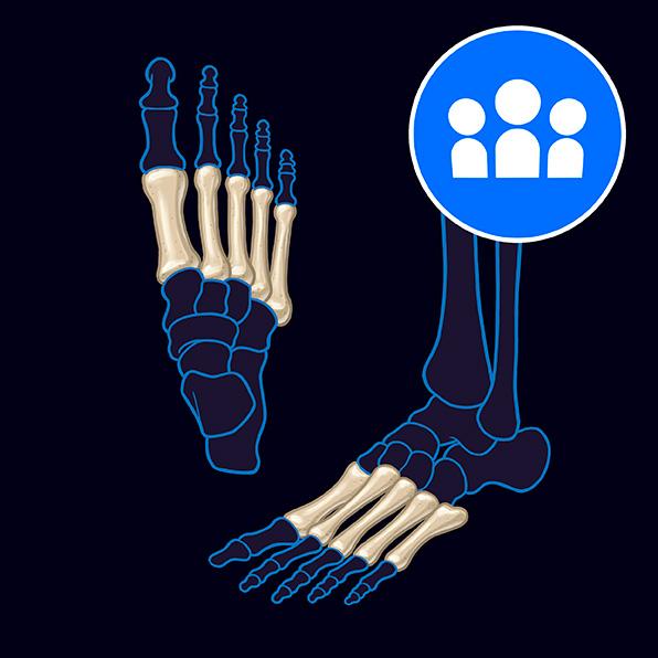 (N) Bones of the Foot