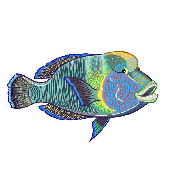 pez napoleón