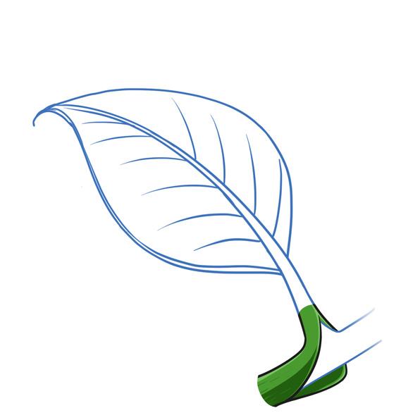 leaf sheath