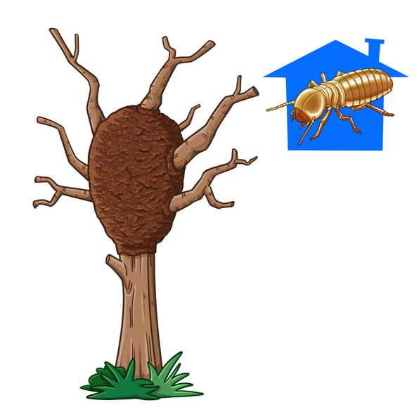 termitero arbóreo